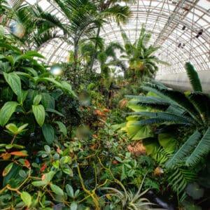 Myriad Botanical Gardens - Crystal Bridge